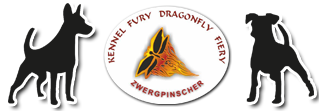 Развъдник за мини пинчери Fury Dragonfly Fiery