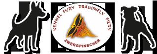 Развъдник за мини пинчери Fury Dragonfly Fiery