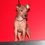 puppy_0000_DSC04734