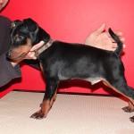 puppy_0001_DSC04594