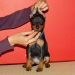 puppy_0002_DSC04559
