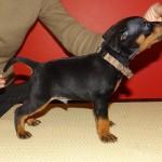 puppy_0004_DSC03251