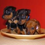 puppy_0007_DSC02848