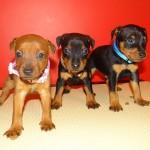 puppy_0008_DSC02833