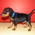 puppy_0009_DSC02829