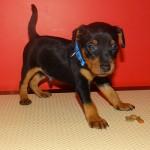 puppy_0010_DSC02823