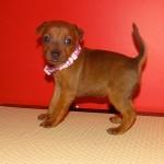 puppy_0011_DSC02816