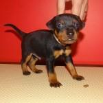 puppy_0012_DSC02810