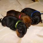 puppy_0014_DSC02218